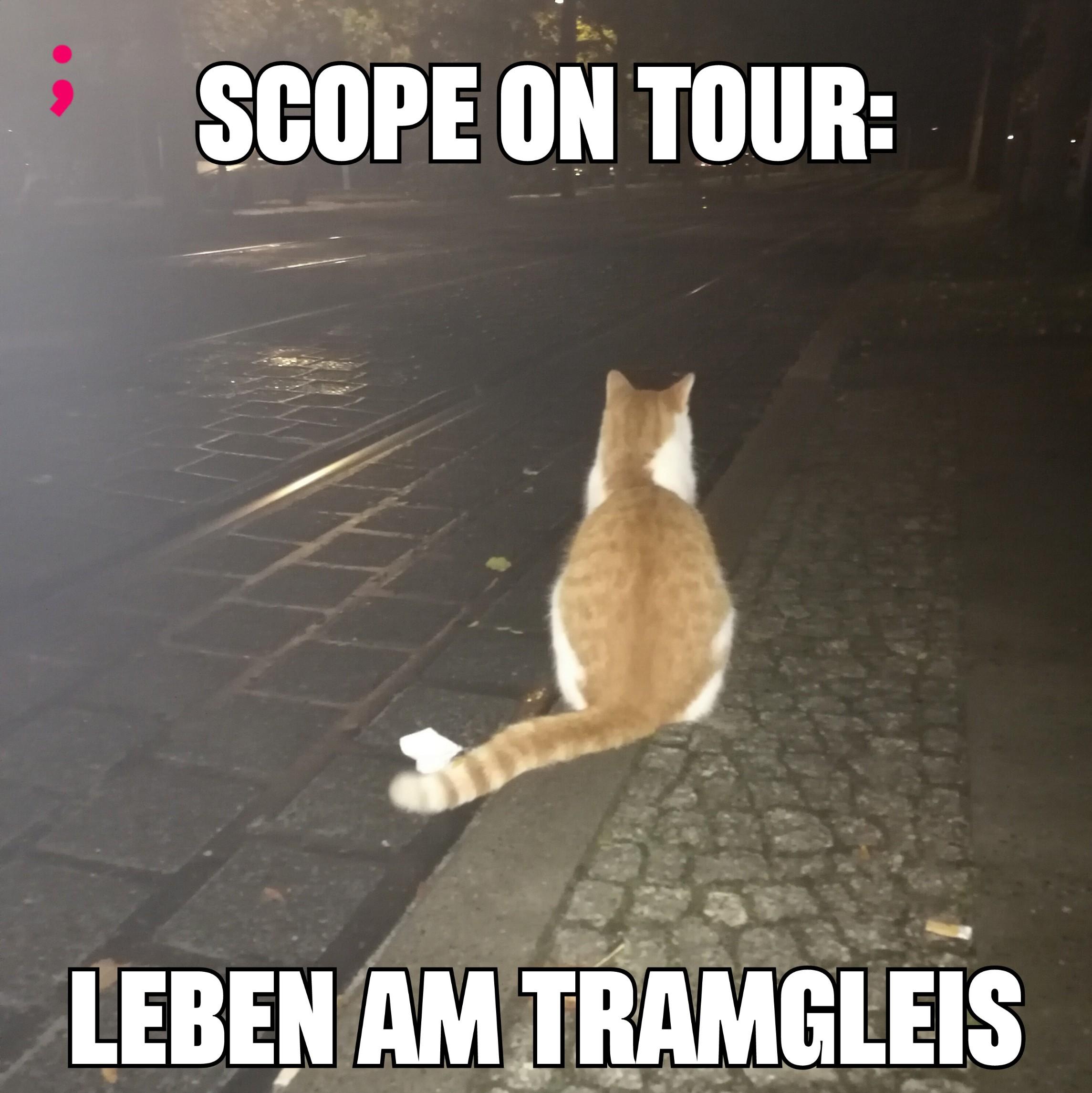 Meme, Katze sitz an der Tramstation neben den Gleisen und schaut in die Ferne