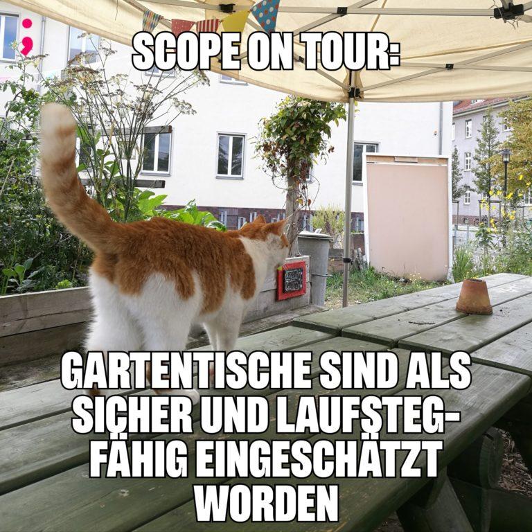Meme, eine Katze läuft auf dem Gartentisch