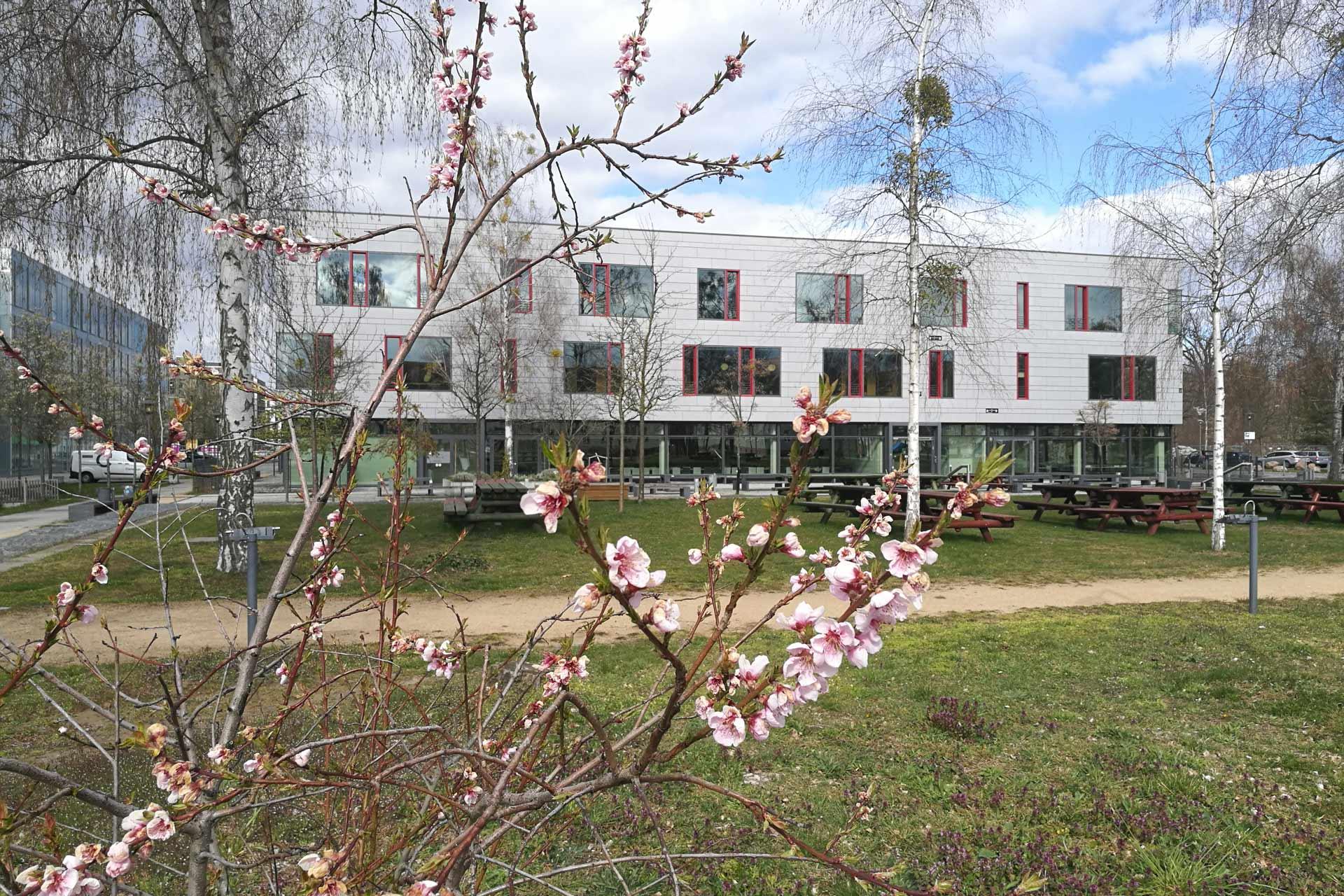 Blüten im Hintergrund das Hauptgebäude, Mensaseite