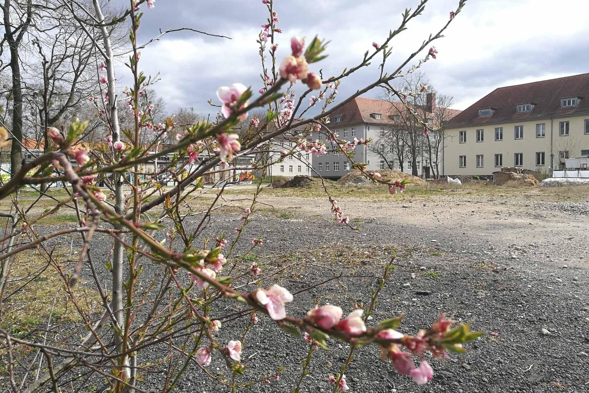 Blüten vor der grauen Campusmitten