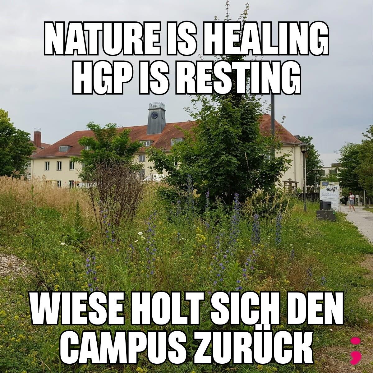Campusmitte, hohe Gräser und Pflanzen